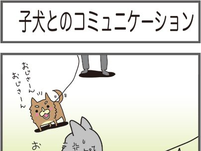 子犬とのコミュニケーション