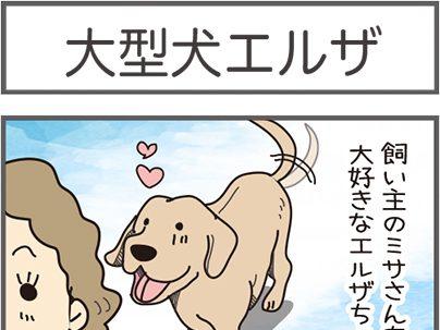 大型犬エルザ