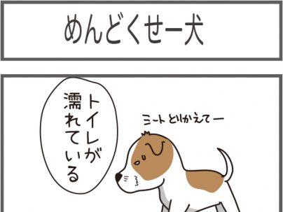 めんどくせー犬