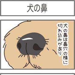 wan896